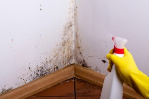 Mold Damage Cleanup St Louis
