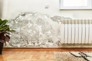 Mold Removal St Louis MO